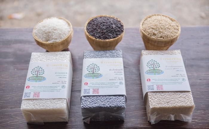 E-commerce กับการเพิ่มช่องทางตลาดให้ชาวนาไทย ขายข้าวผ่านแอพฯ Thai Go Green