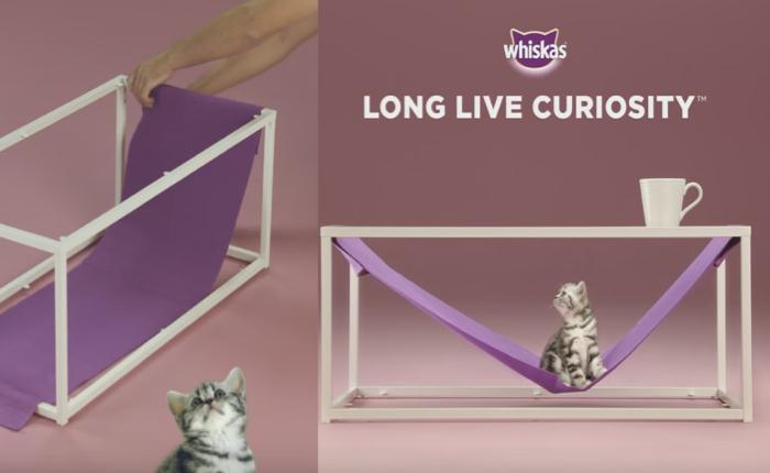 Whiskas ทำ content marketing สอนทาสแมวให้รู้จักสร้างของเล่นเอาใจท่านแมว!