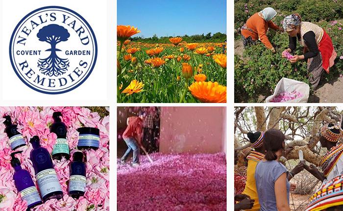 สร้างแบรนด์อย่าง Neal's Yard Remedies จากความซื่อสัตย์สู่ผลิตภัณฑ์ที่เข้าถึงใจผู้บริโภค