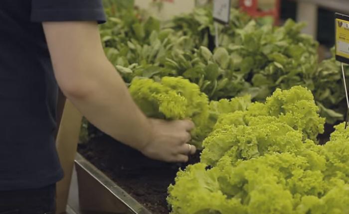 ซูเปอร์มาเก็ตเล่นง่าย ยกสวนมาไว้ในห้าง เด็ดผักจากต้นไปเช็คเอ้าท์ เอาใจลูกค้าชอบความสด