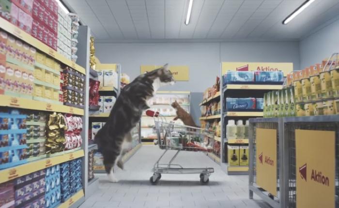 ซุปเปอร์มาร์เก็ตดังจากเยอรมัน สร้าวซุปเปอร์จิ๋วสำหรับแมวเหมียว โชว์ว่าช้อปที่นี่ราคาดีใครๆ ก็แฮปปี้!