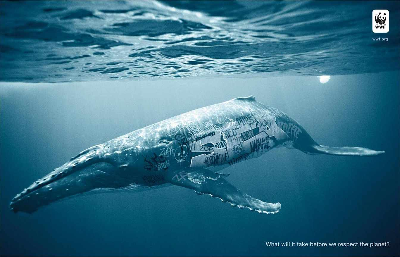 biodiversity-and-biosafety-awareness-whale