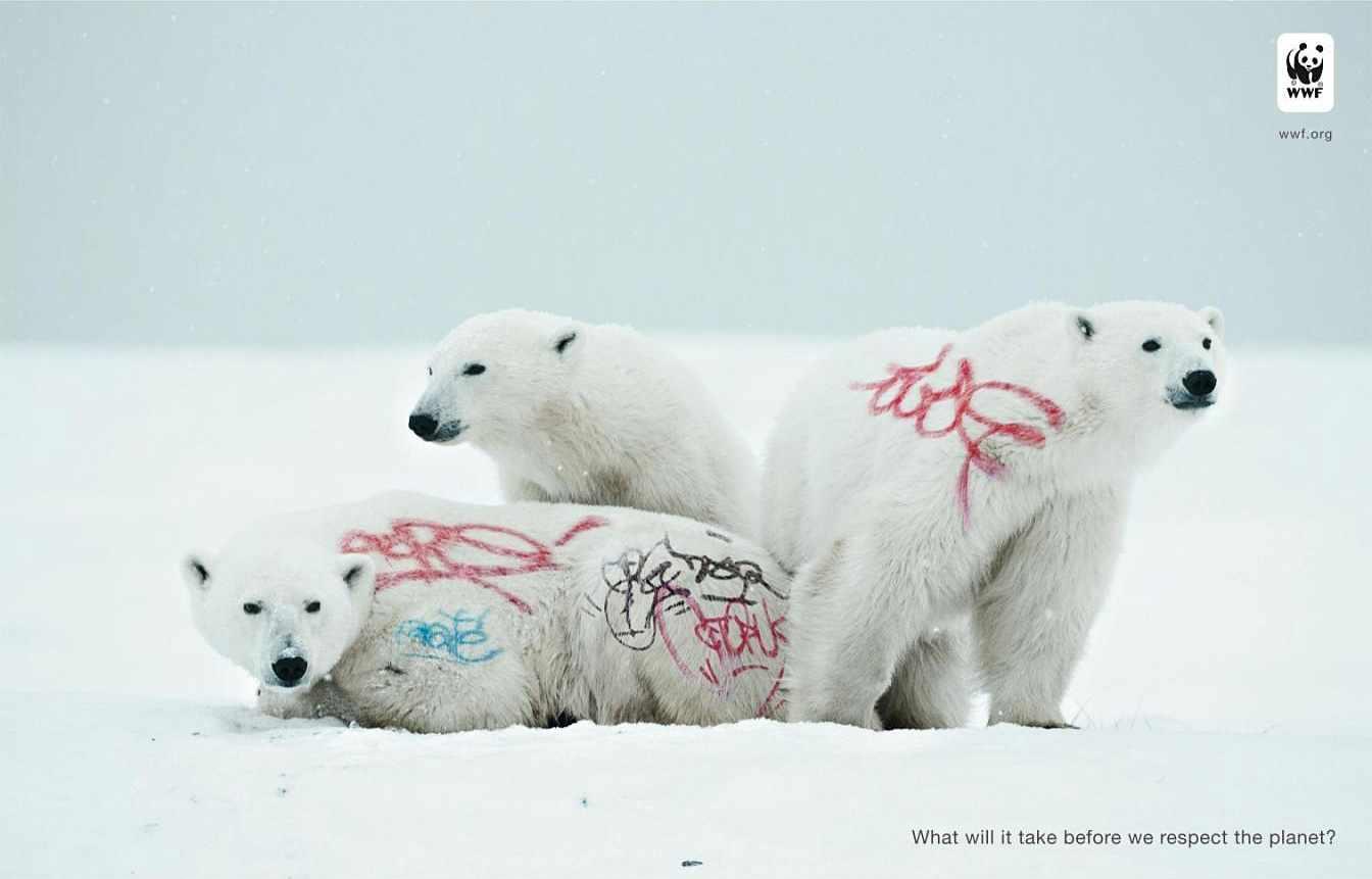 biodiversity-and-biosafety-awareness-white-bear