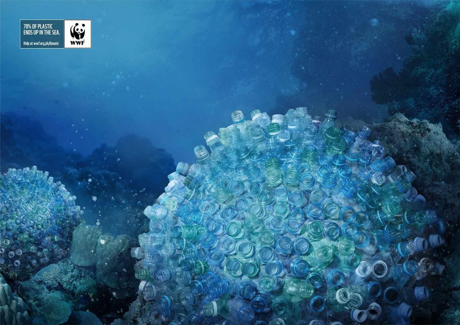 brain-corals