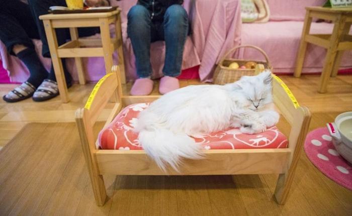 คาเฟ่แมวถูกสั่งปิดถาวรครั้งแรก! เหตุเพราะการดูแล-สถานที่ ไม่เหมาะสม