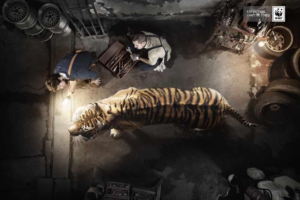 tiger_13