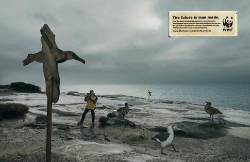 wwf-albatross