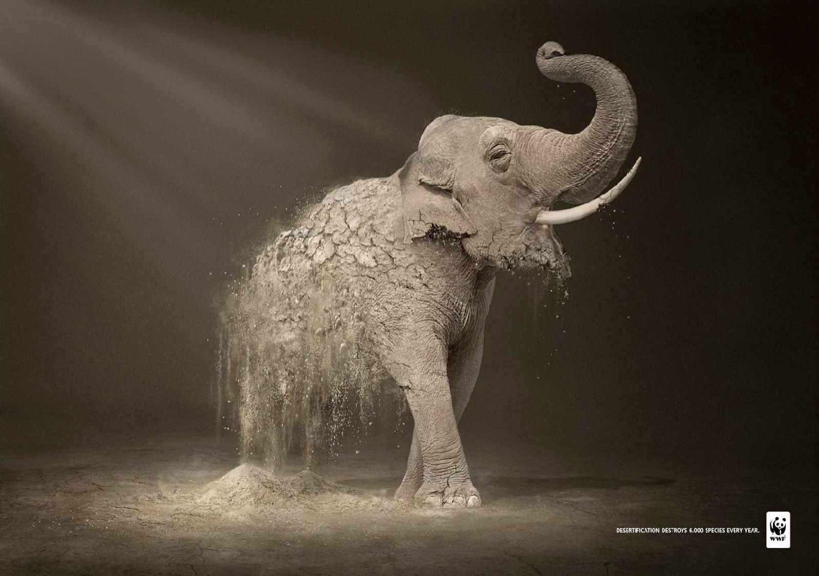 wwf_elephant