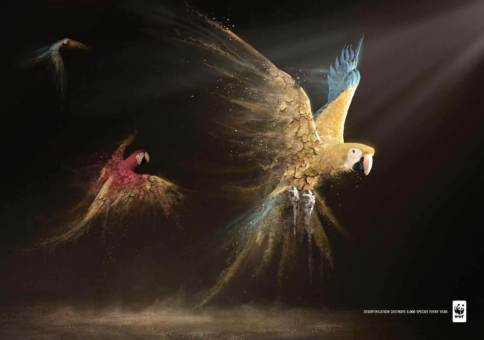 wwf_parrots