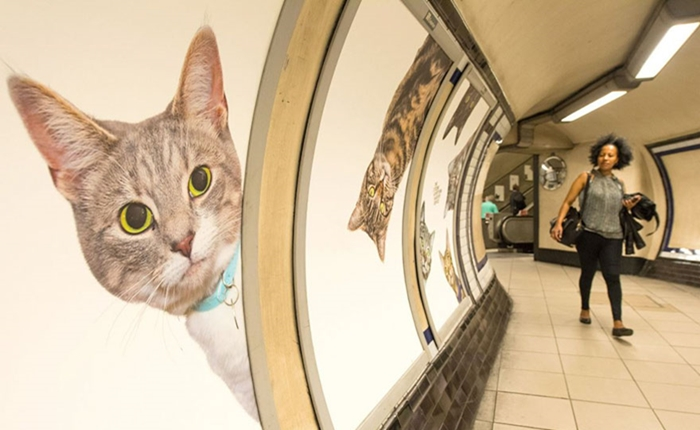 เมื่อน้องเหมียวขอยึดสถานีรถไฟใต้ดิน แคมเปญสุดเจ๋งจินตนาการให้พื้นที่ว่างไม่ได้มีแค่โฆษณา