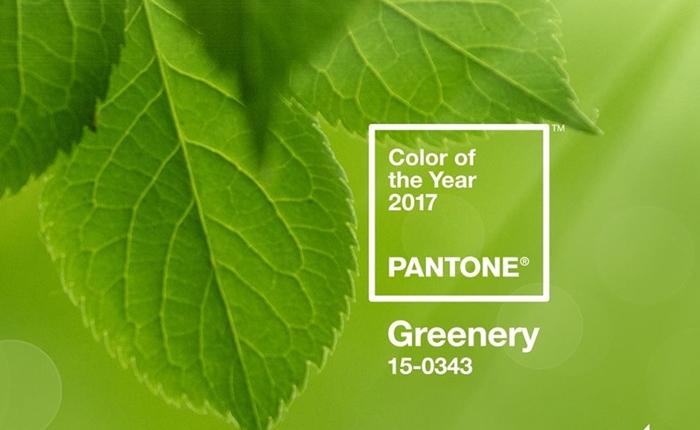 PANTONE ประกาศให้สี Greenery เป็นสีของปี 2017
