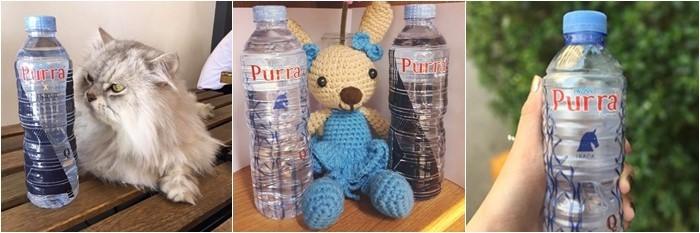 purra8