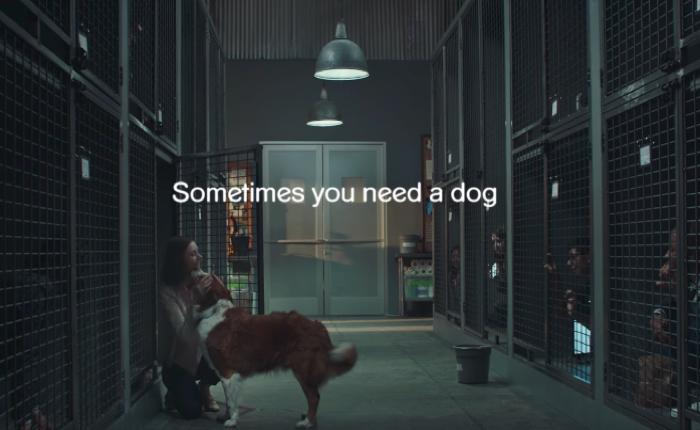 Pedigree ส่งโฆษณาที่คนดูแล้วต้องจุก! เมื่อเราถึงยุคที่ขังตัวเองจนต้องรอให้น้องหมามาเยี่ยม!