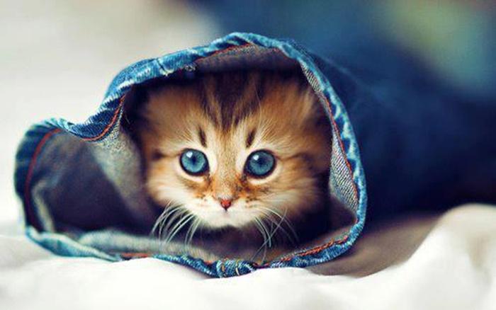 cutie_cat