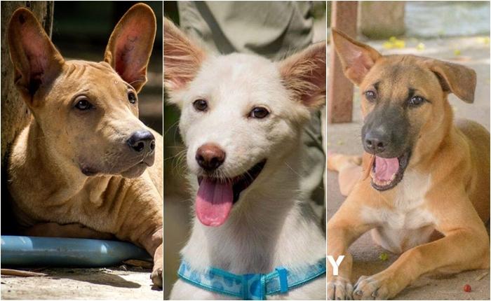 """""""เลี้ยงหมาไทย ใครว่าไม่ Cool"""" มูลนิธิเพื่อสุนัขในซอย เปิดตัวแคมเปญ """"Adopt a Dog"""" ช่วยเหลือปัญหาสุนัขจรจัด"""