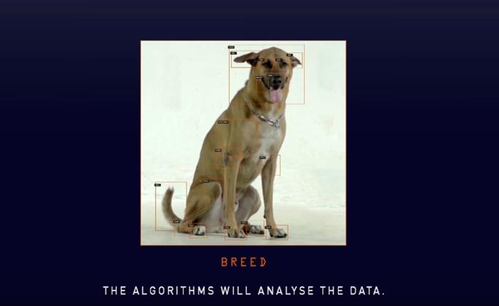 ดิจิทัลแพลทฟอร์มแห่งแรกของโลก ช่วยแมทช์ใบหน้าน้องหมาที่ตายไป ให้เข้ากับน้องหมาในศูนย์รับเลี้ยง