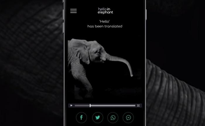 เทคโนโลยีพาเราข้ามทุกขีดจำกัด! 'Hello in Elephant' เครื่องมือเปลี่ยนภาษาคนเป็นภาษาช้าง