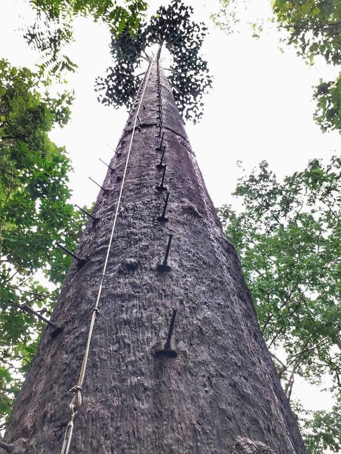 dtac_TreeTower01-02