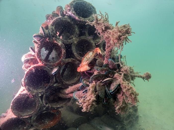 ภาพใต้น้ำของบ้านปลา เอสซีจี เคมิคอลส์ (1)
