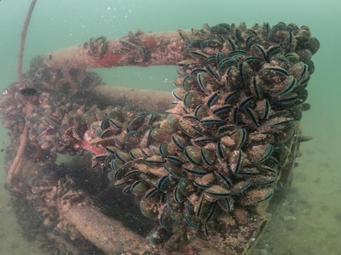 ภาพใต้น้ำของบ้านปลา เอสซีจี เคมิคอลส์ (5)