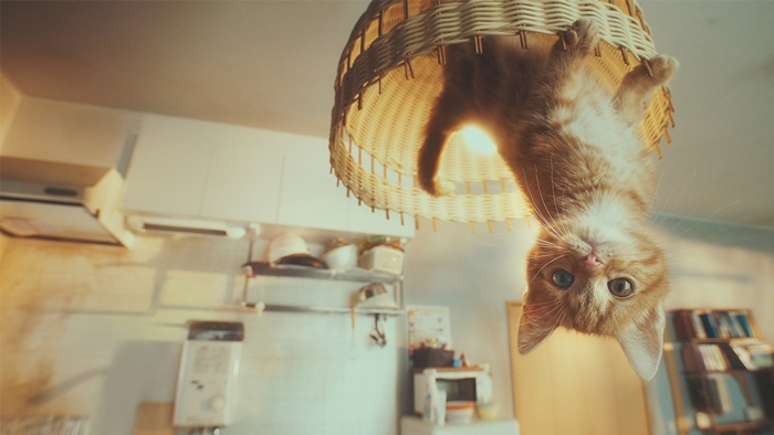 gravity_cat-700