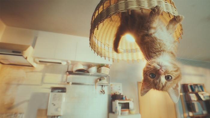 """""""Gravity Cat"""" ผลงานที่สร้างจากความเชื่อ จนคว้า 2 รางวัลใน ADFEST 2018"""