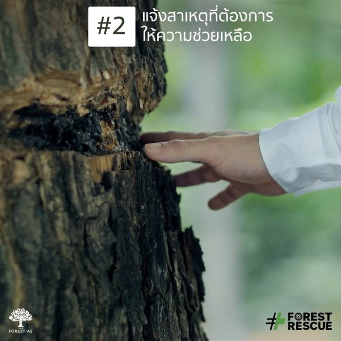 ForestRescue_4