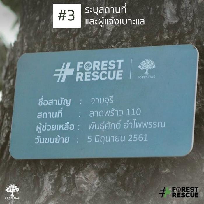 ForestRescue_5