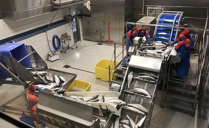 NSC-salmon-norway-factory2