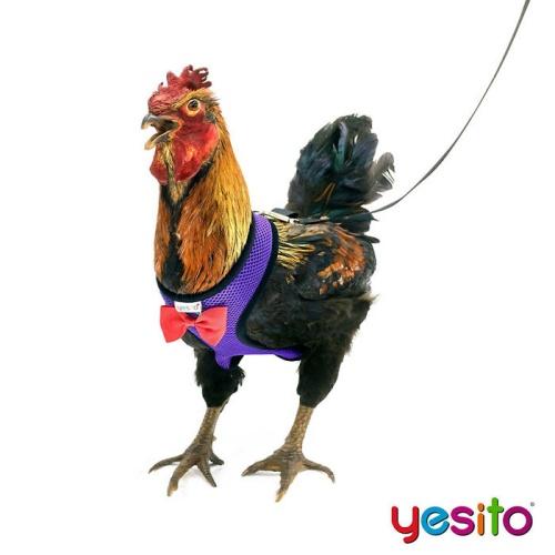 Yesito 04