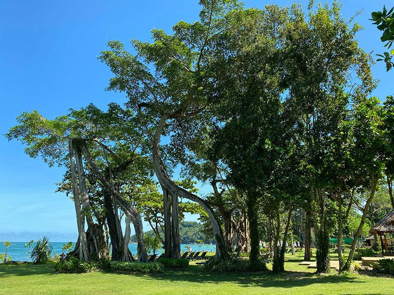 รีสอร์ตแห่งนี้ เป็นพื้นที่ป่าและอุดมไปด้วยต้นไม้ใหญ่และธรรมชาติ